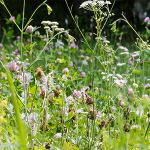 Driving With Hay Fever: Tips From IAM Roadsmart