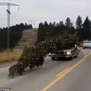 Oversized Christmas Tree On Top Of Car Caught On Camera
