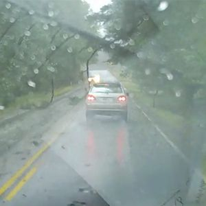 Video Shows Close Call Between Car And Falling Tree