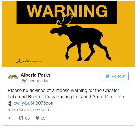 moose licks car